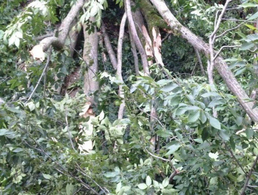 «Оперативно сработали»: Дубровский похвалил службы заработу вовремя урагана