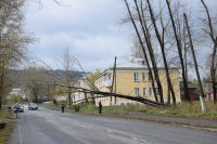 Фотофакт: в Бакале дерево упало на линию электропередач