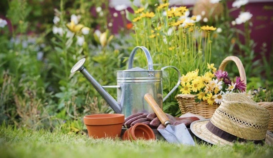 Субсидии для садовых товариществ распределили помуниципалитетам